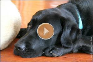 Image Vidéo 4